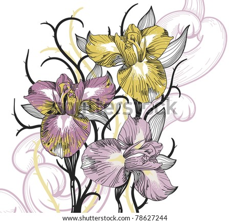 vector floral illustration of blooming irises - stock vector