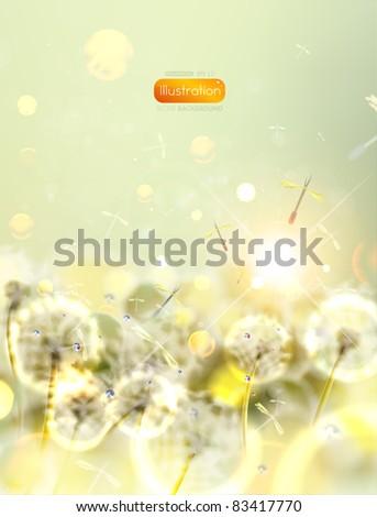 Vector flower background. Dandelion. - stock vector