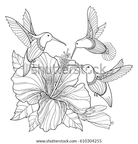 Hummingbird And Hibiscus Drawing Bing Images Sketch
