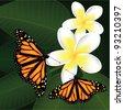 vector frangipani and butterflies - stock vector