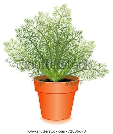 Dill weed dill garnish Stock Photos, Images, & Pictures | Shutterstock