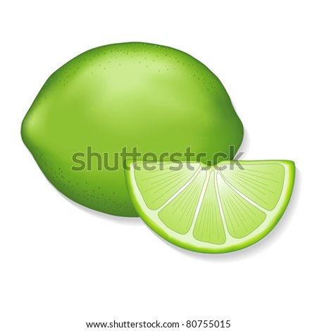 vector - Fresh Lime and Lime Slice. Illustration isolated on white. EPS8 organized in groups for easy editing. - stock vector