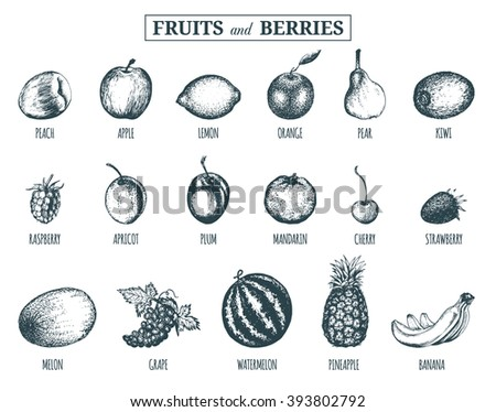 Vector fruits. Fruits and berries isolated. Vector illustration of  fruits and berries. Sketch of  fruits and berries. Fruits collection. Fruits and berries background. Hand drawn fruits and berries. - stock vector