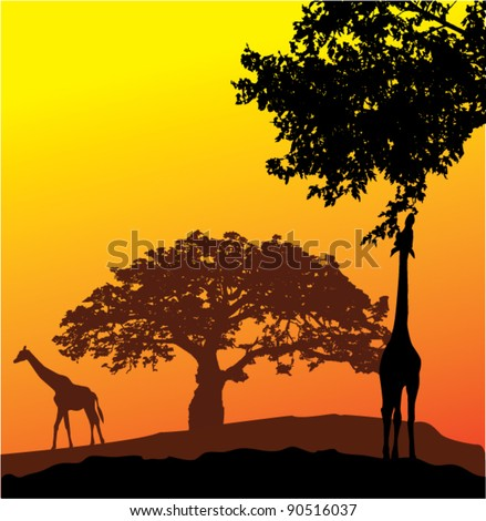 vector giraffes silhouettes and african landscape