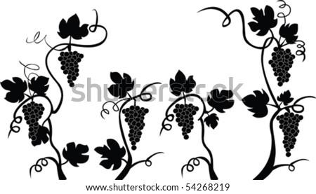 Vector grapes - stock vector