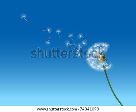 vector graphic illustration depicting dandelion seed dispersal - stock vector