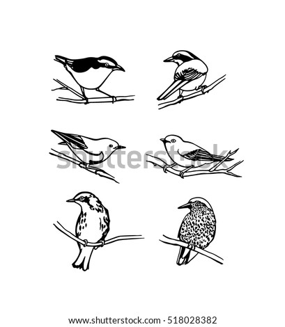 Vector Graphic Set Of Hand Drawn North America Birds Sitting On Branches Ink Drawing