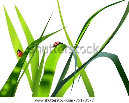 Lady Bug Cartoon Climbing Blade Grass Stock Vector
