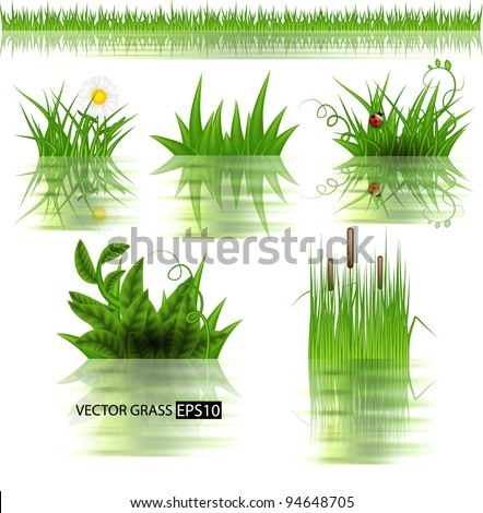 Vector grass set with reflection in water. - stock vector