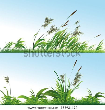 Vector Green Grass - stock vector