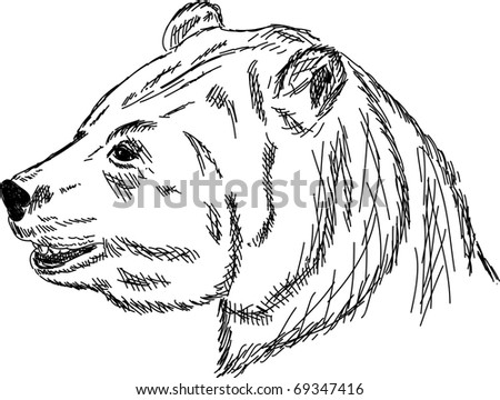 vector - hand draw portrait bear isolated on background