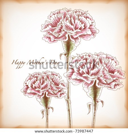 Vector Hand Drawn Carnations, Element for Mother's Day - stock vector