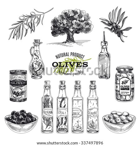 Vector hand drawn illustration with olives and olive oil. Sketch. - stock vector