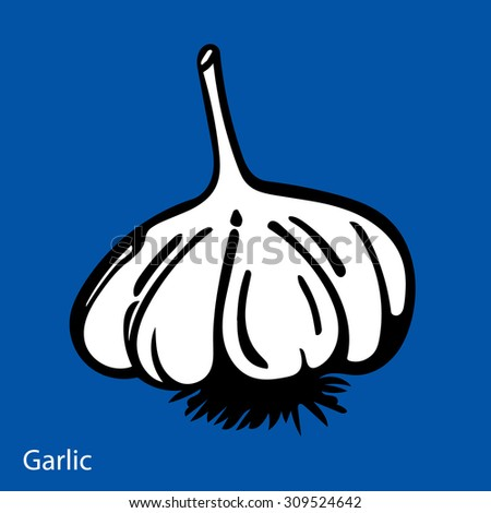 Vector hand drawn illustration with spice garlic - stock vector