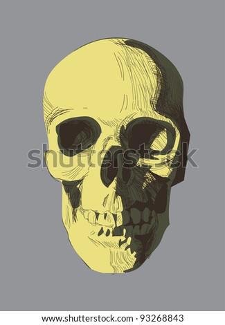 vector hand drawn skull. eps 8 - stock vector