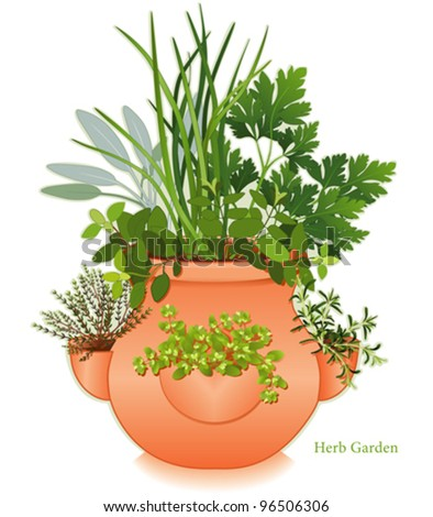 vector - Herb Garden, Clay Strawberry Jar Planter. For cooking, left-right: English Thyme, Italian Oregano, Sage, Chives, Parsley, Rosemary, Sweet Marjoram. EPS8 compatible. See others in series. - stock vector