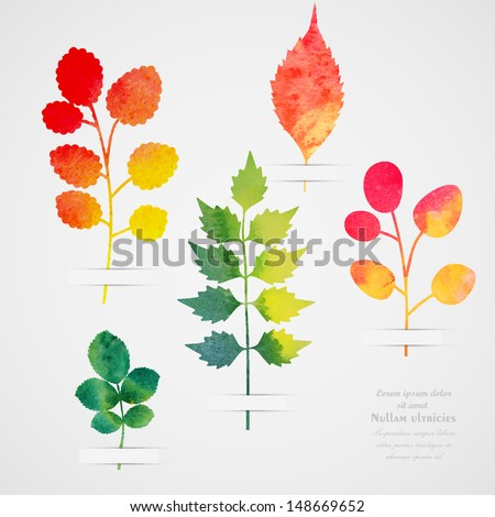 Vector herbarium. Vintage template. Watercolor leaf. Collection of watercolor hand drawn leaves. Autumn seamless pattern with leaf. Autumn theme. - stock vector
