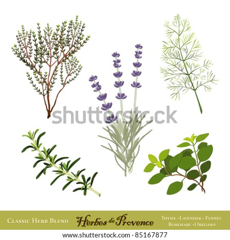 vector - Herbes de Provence. Traditional French herb blend from the south of France: Thyme, Sweet Lavender, Sweet Fennel, Rosemary, Oregano, isolated on white. EPS8 compatible. - stock vector