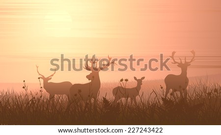 Vector horizontal illustration of wild deer on meadow at sunset. - stock vector
