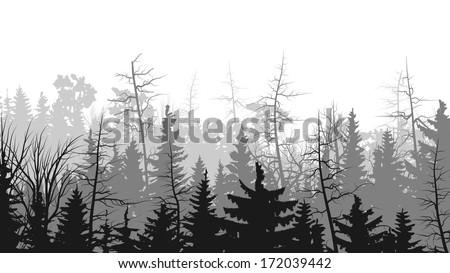 Vector horizontal illustrations coniferous treetops forest (pine, spruce, cedar). - stock vector