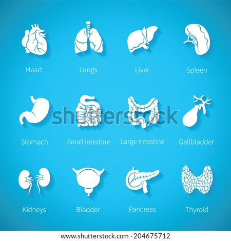 Vector icon set of human internal organs like heart spleen lungs stomach thyroid intestine bladder gallbladder pancreas kidneys and liver in flat style with shadow - stock vector