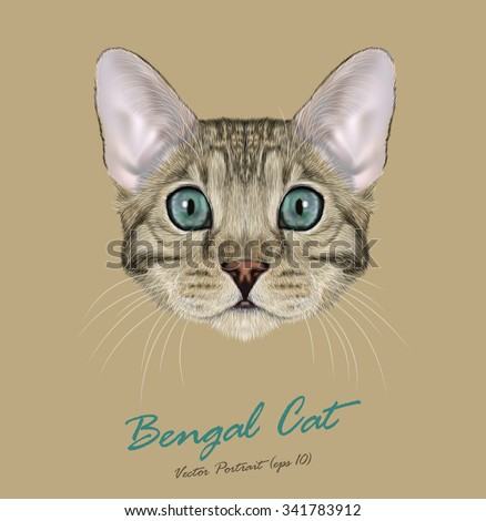 Vector Illustrated Portrait of Bengal Cat. Cute face of Domestic purebreed Grey-spotted color cat on natural background - stock vector