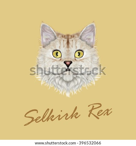 Vector Illustrated portrait of Selkirk Rex cat. Cute face of cute domestic cat on yellow background. - stock vector