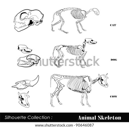 Animal Anatomy Stock Images Royalty Free Vectors