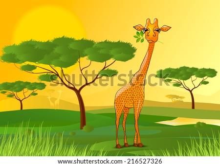 vector illustration Giraffe eating leaves in Africa at sunset - stock vector