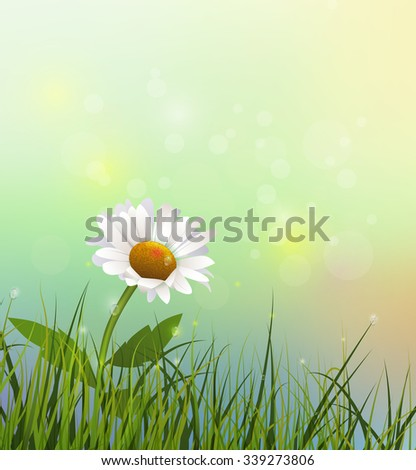 Vector illustration green grass and white flower. Spring nature field with Gerbera- Daisy flower at meadow and water drops dew on green leaves. Blue- green pastel color and bokeh effect background - stock vector