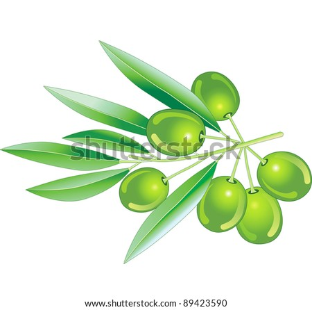 Vector illustration. Green olives with leaves.
