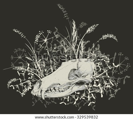 Vector illustration. Hand drawing of a skull of a predator among the grasses. On a dark background. - stock vector