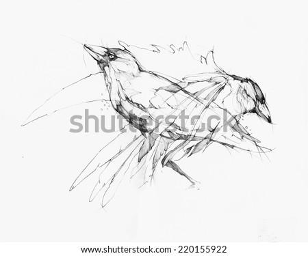 Vector illustration, hand graphics - Raven  - stock vector