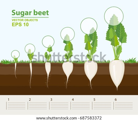 sugars and plant growth data Plant hormones, nutrition, and transport table  plant hormones a uk site with links and plant hormone-related data  essential elements for plant growth.