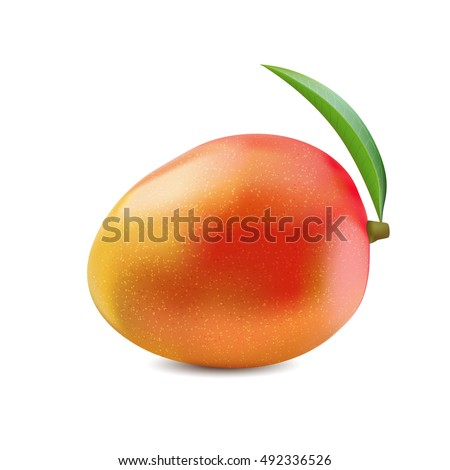 Vector illustration indica mango in natural style. Whole yellow-red-orange mango with green leaf on white background.