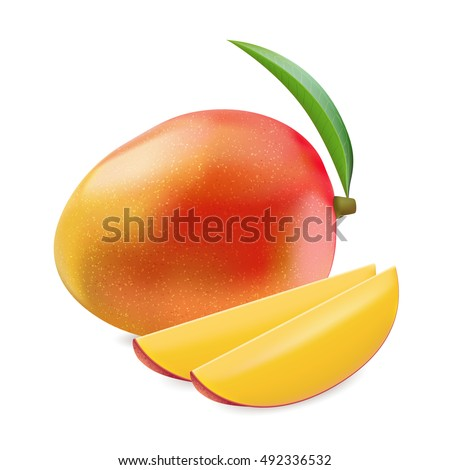 Vector illustration indica mango in realistic style. Whole and two slice yellow-red-orange mango on white background.