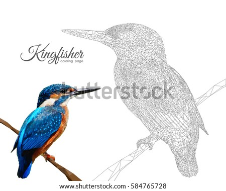 Vector Illustration: Kingfisher Coloring Page In Low Poly Style.