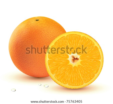 Vector illustration of a Fresh juicy oranges isolated on white background. - stock vector