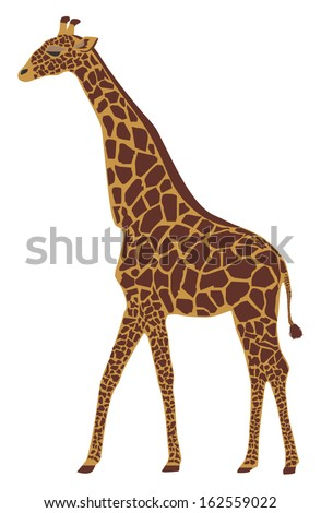 Vector illustration of a giraffe