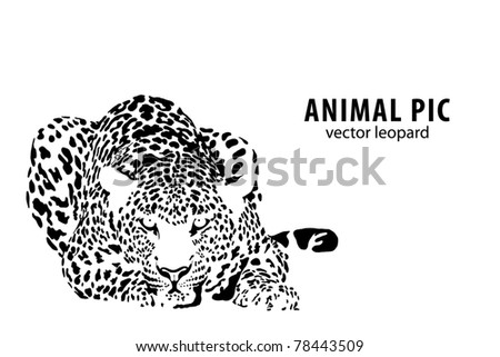 Vector illustration of a leopard on white background - stock vector