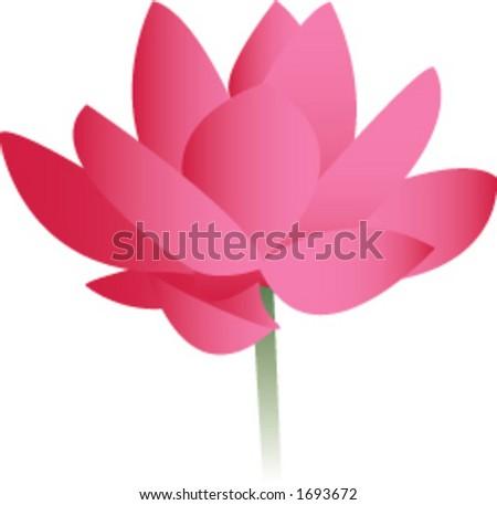 Vector illustration of a lotus blossom. - stock vector