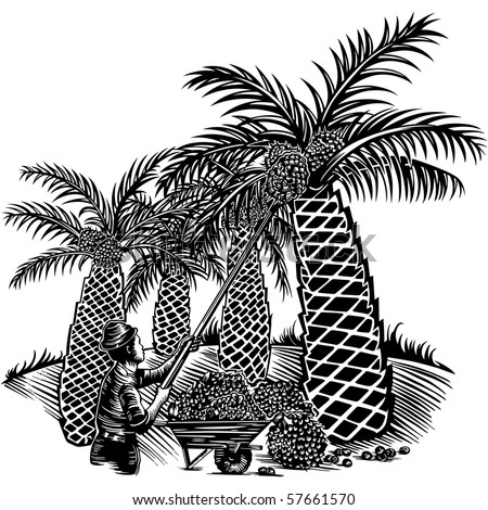 Vector illustration of a plantation worker harvesting palm oil fruits.