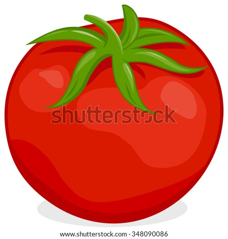 Vector illustration of a ripe fresh tomato on white background, isolated - stock vector