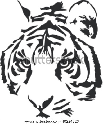 Vector illustration of a tiger´s face (head) on white background