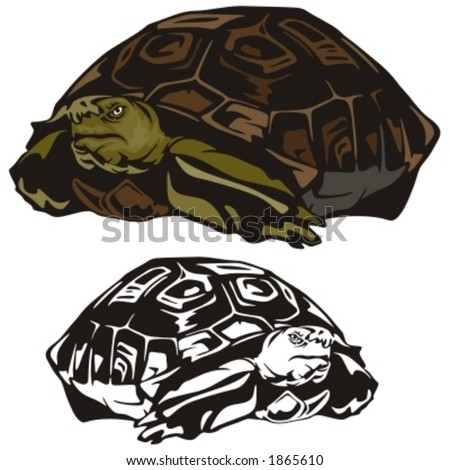 Vector illustration of a turtle. - stock vector