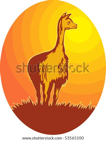 vector illustration of a Vicuna standing with sun in background - stock vector