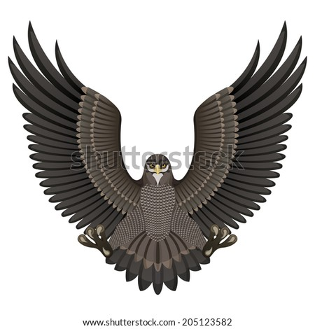 Vector illustration of an eagle isolated on white background - stock vector