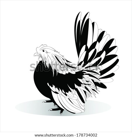 Vector illustration of black and white Bantam on a white background,female - stock vector
