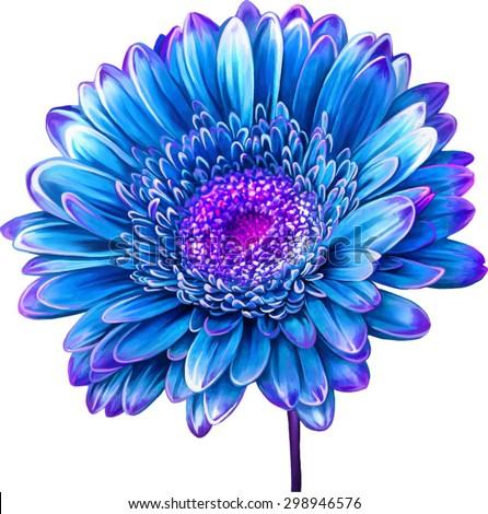 Vector illustration of bright blue Dahlia flower. Spring flower.Isolated on white background. - stock vector