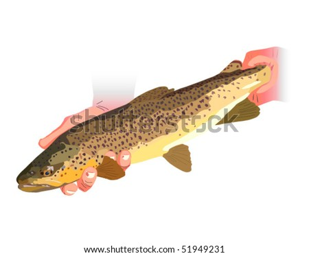 Vector illustration of Brown Trout being released. Raster image also available - stock vector